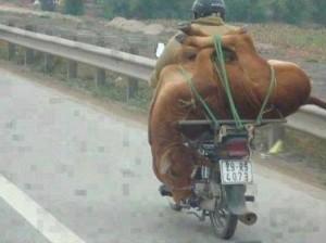 نقل خاص