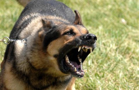 8 جرحى بمير اللفت بسبب هجوم كلب