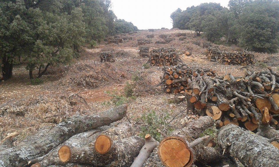 تدمير آلاف الشجار بغابة بالاطلس المتوسط واختيارها لاقامة غولف سياحي