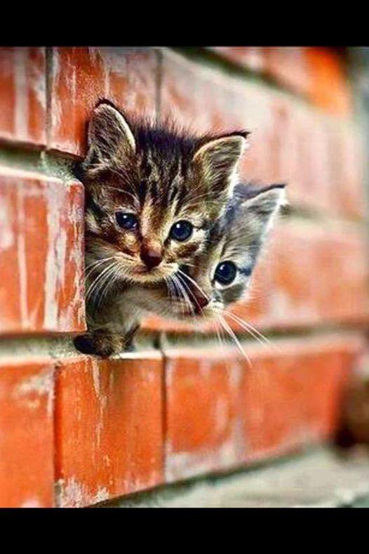 براءة القطط