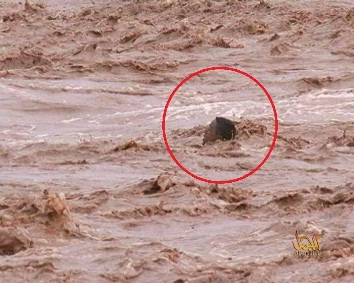 بــيـان مـنـظمـةتاماينوت بشأن الفيضانات الأخيرة