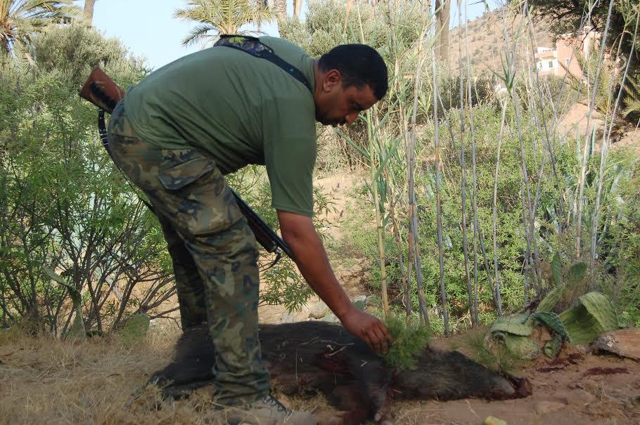 """جمعية """" تكانت إكويان """" للقنص تنظم حملة إحاشة للخنزير البري بجماعة رسموكة"""
