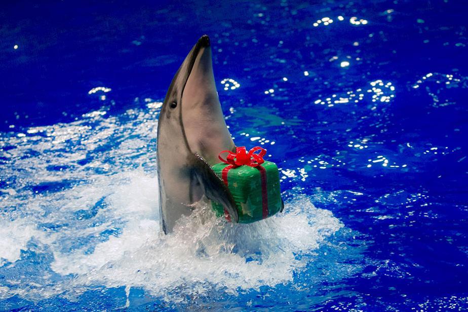 هدية من تحت الماء