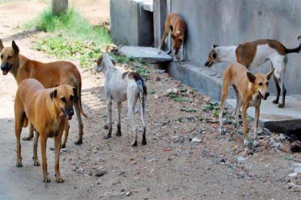 إعدام الكلاب الضالة بجماعة الركادة أولاد جرار