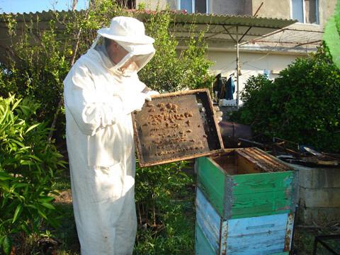تعاونيات فلاحية يشتكون من طريقة توزيع خلايا النحل الفارغة بسيدي إفني