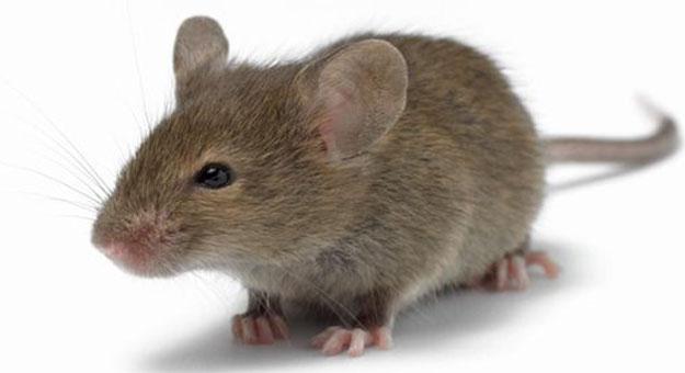 محاولة انتحار بسم الفئران بتزنيت
