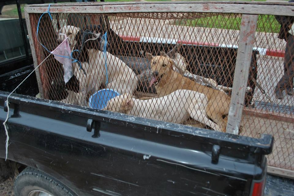 تيزنيت : حملة مفتوحة لأسر الكلاب الضالة