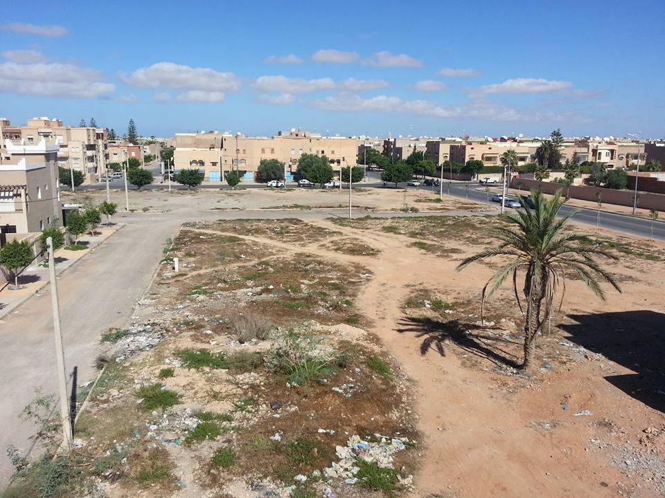 النخلة الصامدة أمام زحف العمران