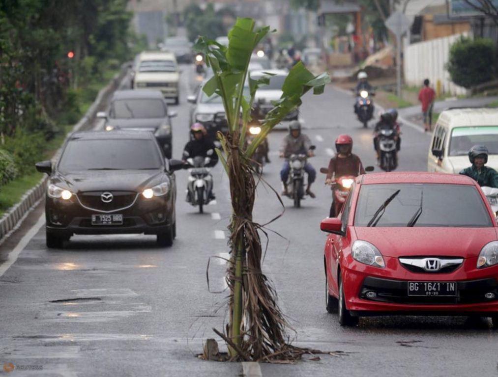 غرس الأشجار للحد من حوادث السير !