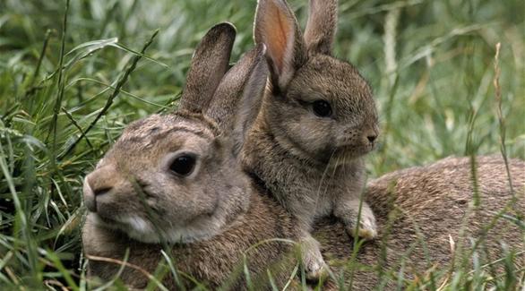 حول الاتجار غير المشروع في الحيوانات بالمغرب