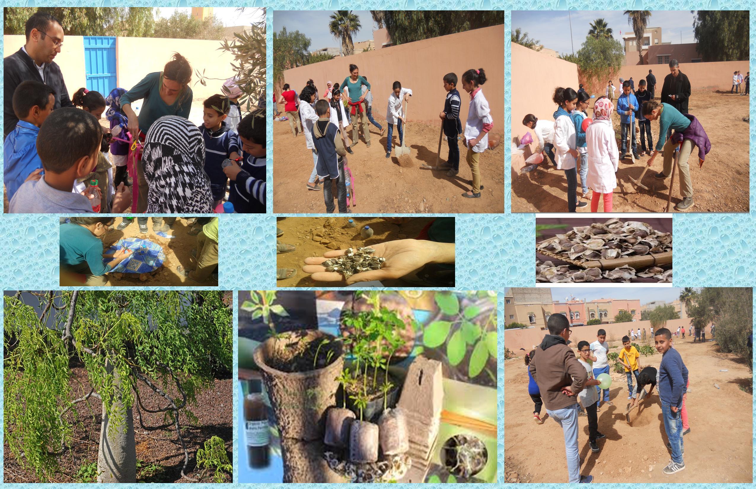 بلاغ إخباري: ورشة لتدريب التلاميذ على غرس نبتة شجرة هندية جديدةبمدرسة المختار السوسي بمدينة تيزنيت