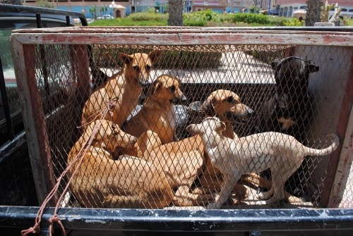 كلب مسعور يهاجم شخص بباب المعدر و يرسله للمستعجلات