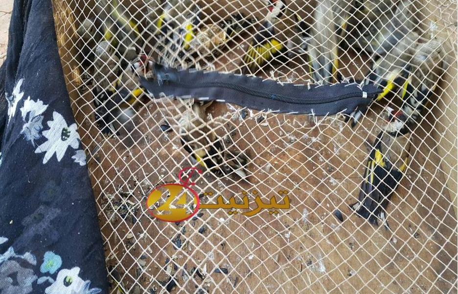 اعتقال شخص باكلو و بحوزته 19 طائر حسون + صور