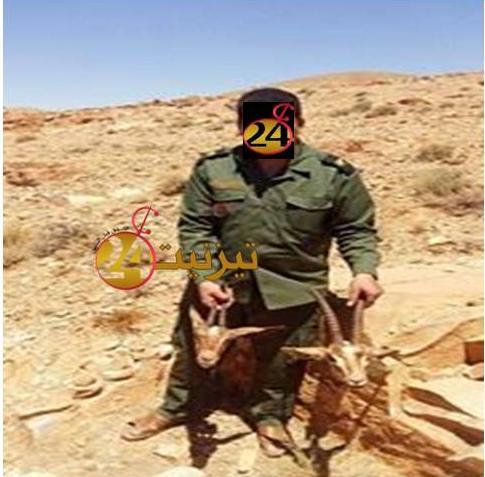 ايقاف سبعة أشخاص متورطين في صيد الغزلان بجماعة أيت عبد الله بتارودنت