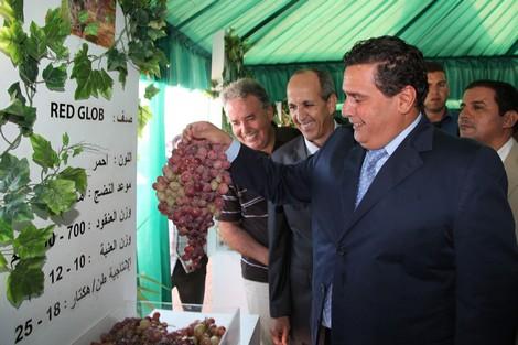 أخنوش يحقق في صفقات مخطط المغرب الأخضر