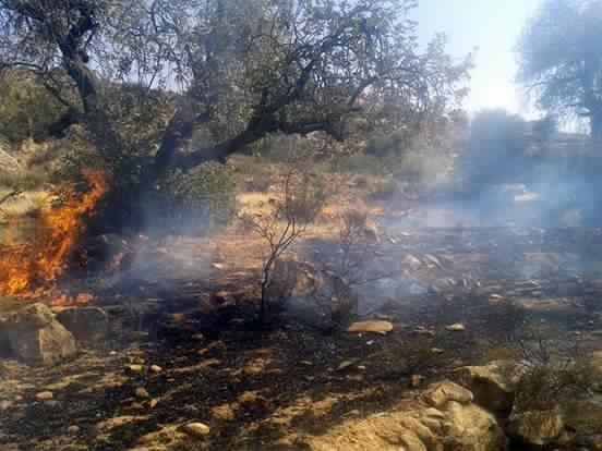 حريق مهول بتافراوت المولود يلتهم مساحات مهمة من الغطاء النباتي